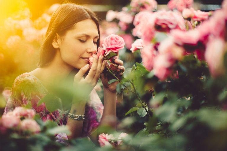 картинки запахи цветов данном разделе