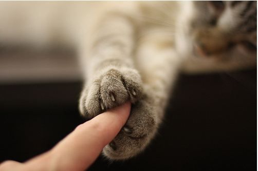 Почему кошки мнут лапами одеяло или тело человека
